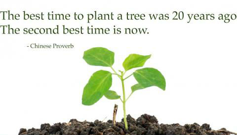 """""""the best time to plant a tree is 20 years ago. The second best time is now."""" Sticker"""